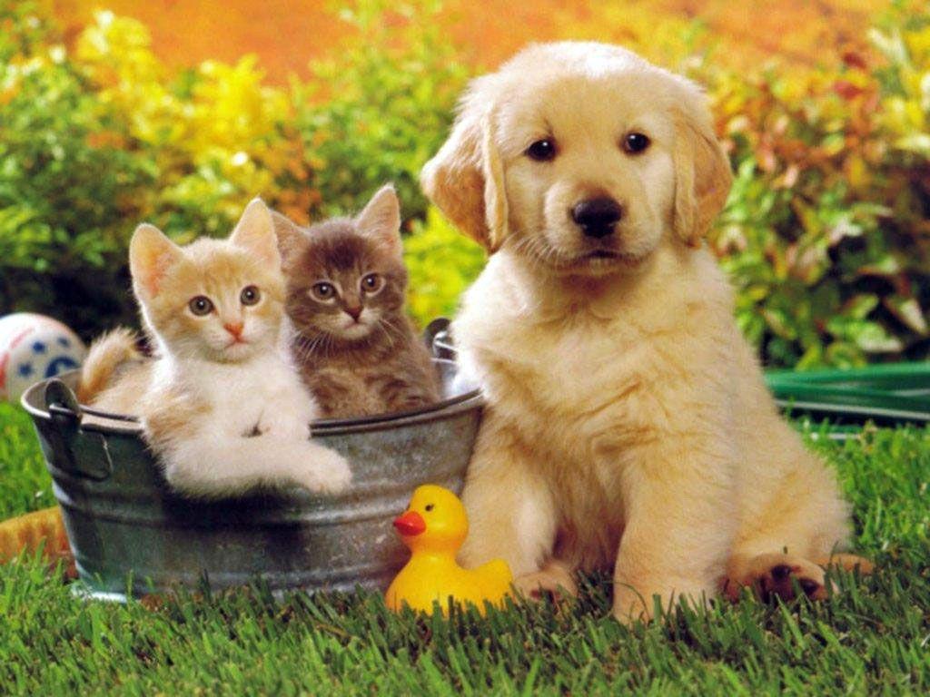 Evcil Hayvanlar İçin Hava Temizleme