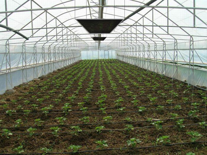 Seralar ve Bitki Koruma Sistemleri